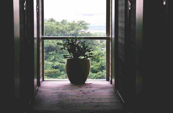 Livingroom Plant