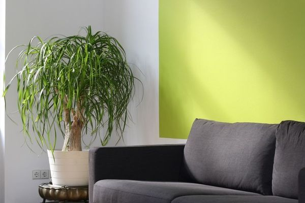 planta en un salón
